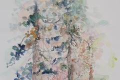 Borovi - akvarel, 40x30cm, 2018.