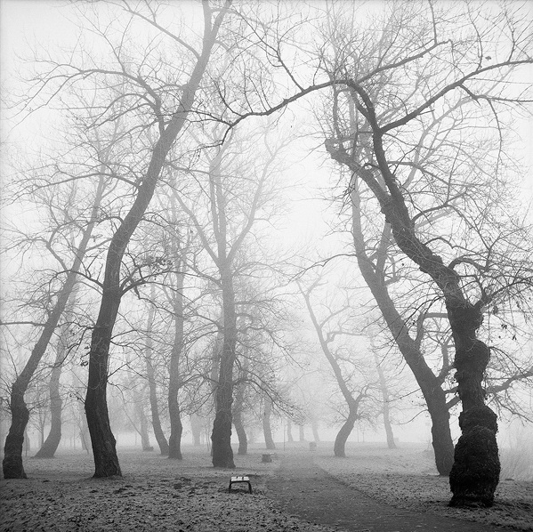 Trees In A Winter Fog - South (Zagreb, 1999.)
