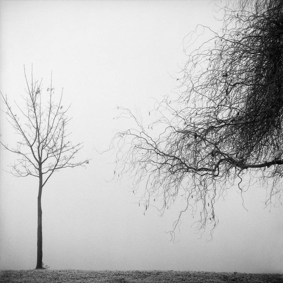 Max Juhasz - Trees in a Winter Fog - North;  CB fotografija,  60x60cm, 1999.